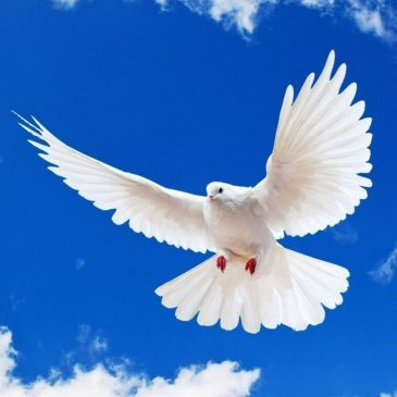 Why God blessed a Dove