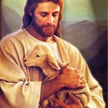 Jesus a very good shepherd