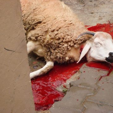 Satan a very bad shepherd
