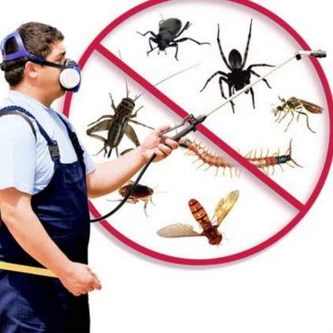 Your tithe kills pests.